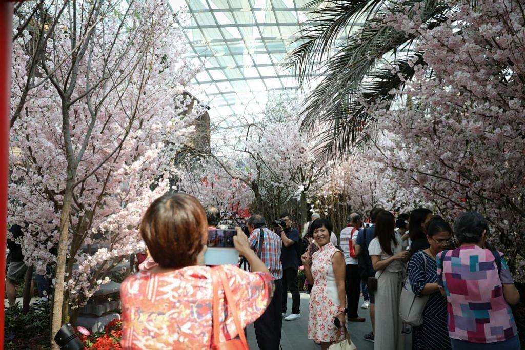 Perjalanan ke Jepun terganggu? Nikmati keindahan bunga sakura di Taman di Persisiran