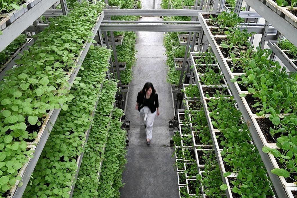 Tawaran tender 2 tapak tanah pertanian dibuka