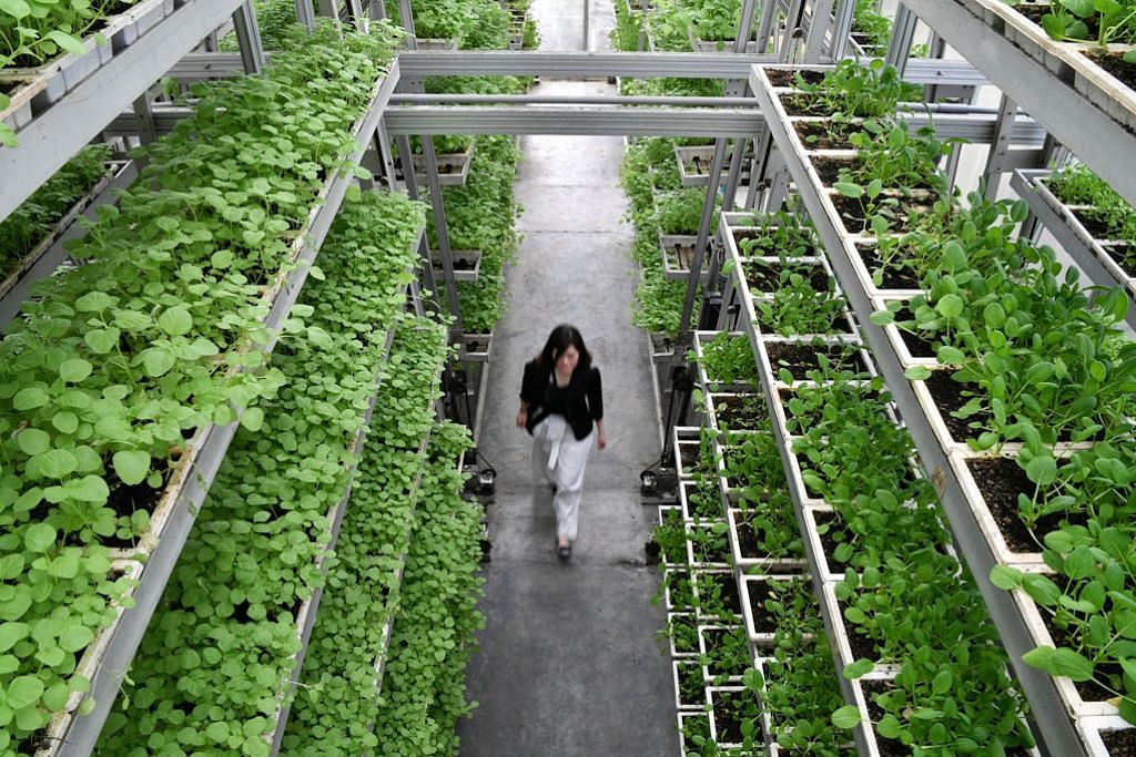 Kelompok pertanian-makanan berteknologi tinggi akan dibangunkan di Lim Chu Kang