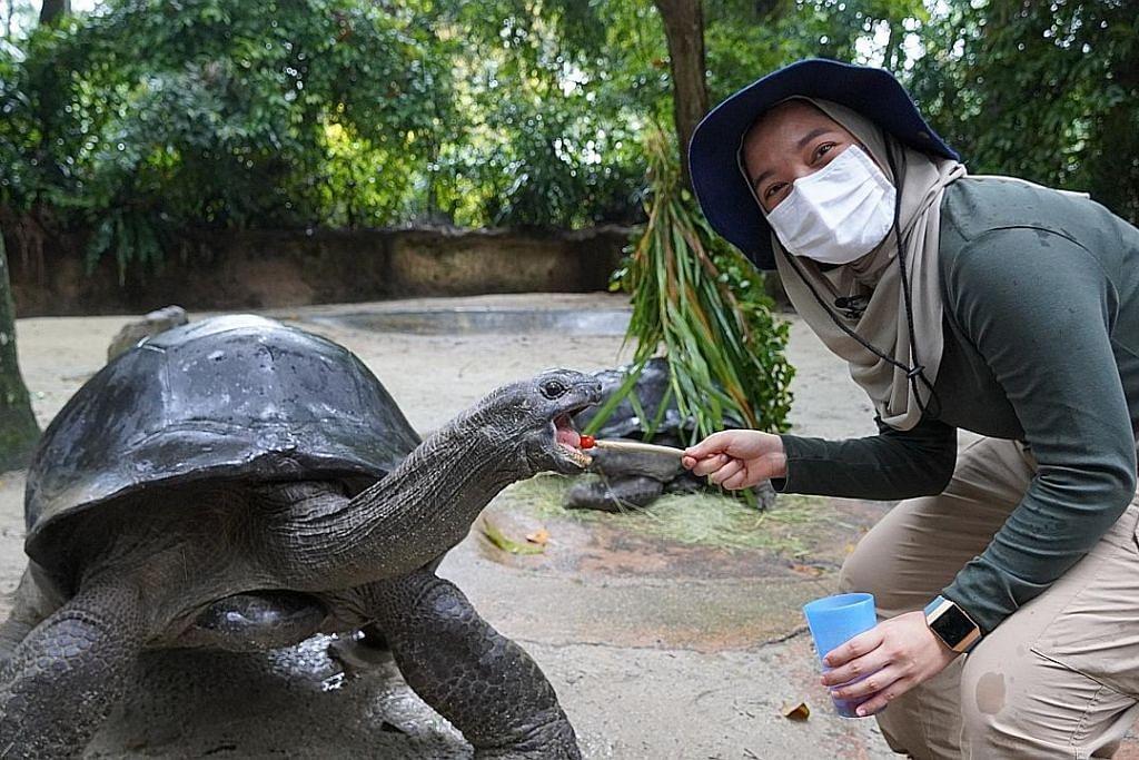 Seronok dapat suap 'atuk' kura-kura makan