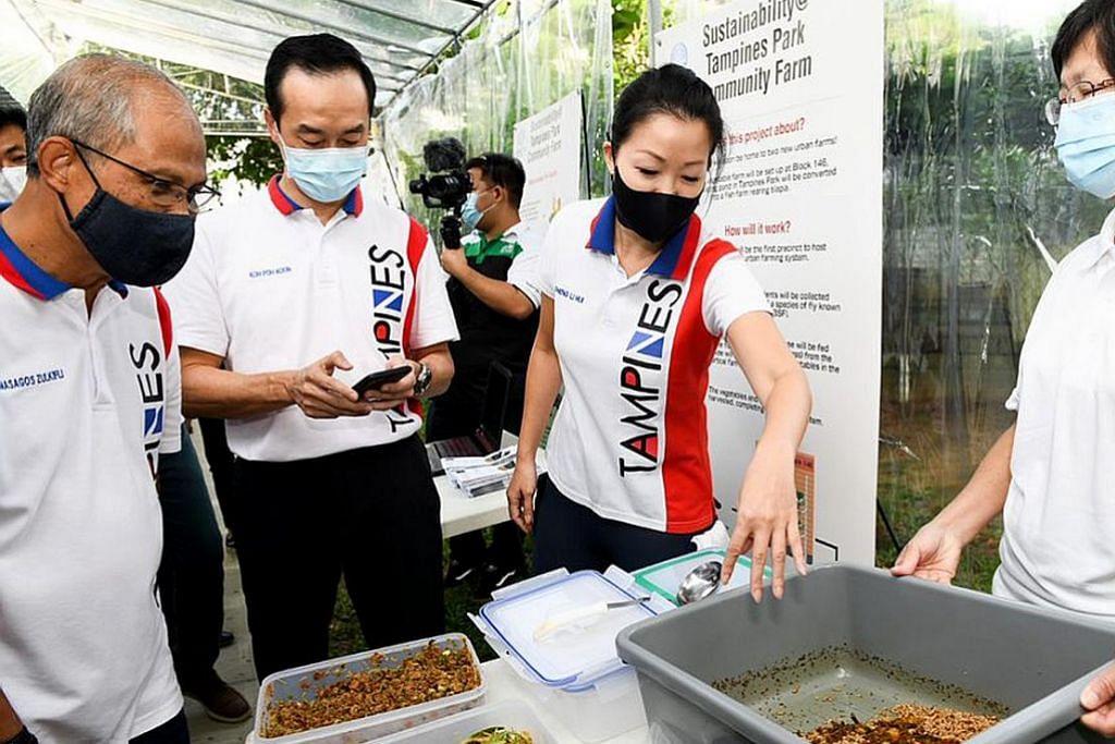 Ke arah jadikan Tampines bandar eko: Kurangi sisa makanan, hasilkan sayur-sayuran mampan