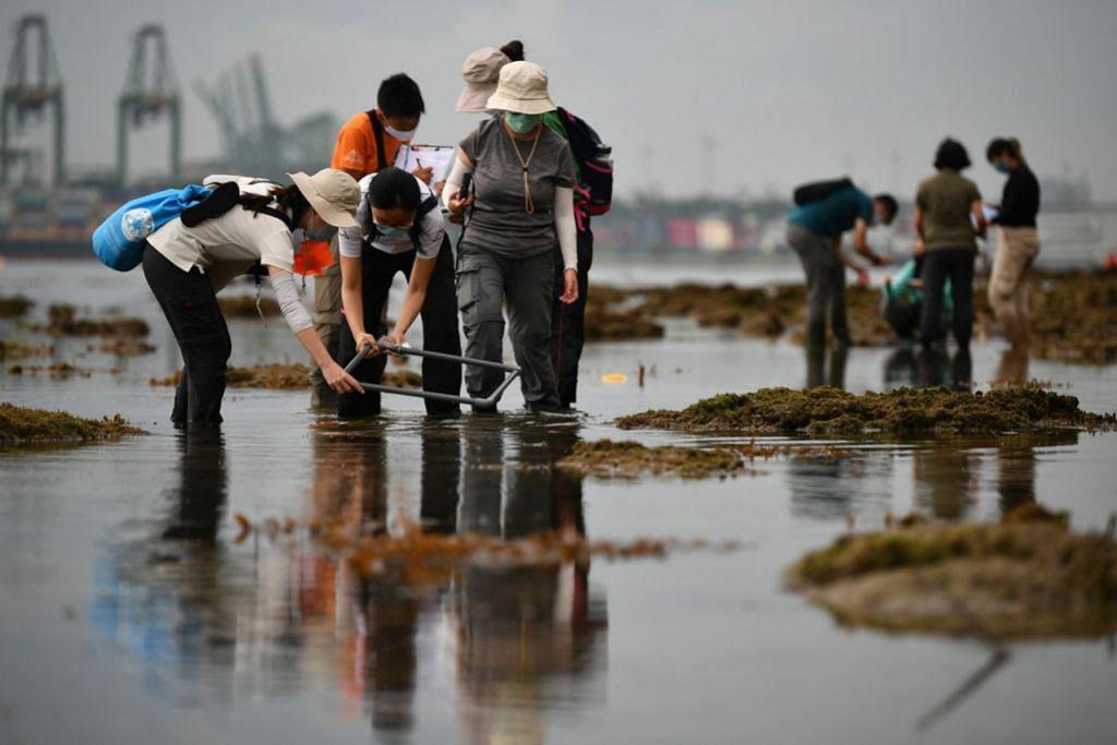 INJAUAN BIODIVERSITI: Kakitangan Lembaga Taman Nasional (NParks) dan relawan telah ke Tanjong Rimau untuk mencari dan mengkaji flora dan fauna yang terdapat di perairan yang cetek. - Foto BH oleh LIM YAOHUI