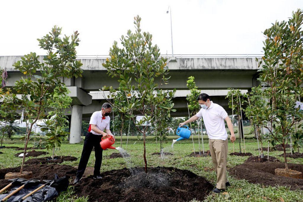 SERIKAN LAGI KEHIJAUAN: Encik Lawrence Wong (kanan) dan Encik Gan Kim Yong menanam pepohon Tristaniopsis merguensis di acara perasmian ciri-ciri lanjutan jambatan Villa Verde yang baru pada Sabtu (17 April). - Foto CHINESE MEDIA GROUP       merguensis.
